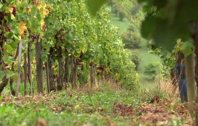 À venir : ODG IGP Côtes de Gascogne & CA du Gers