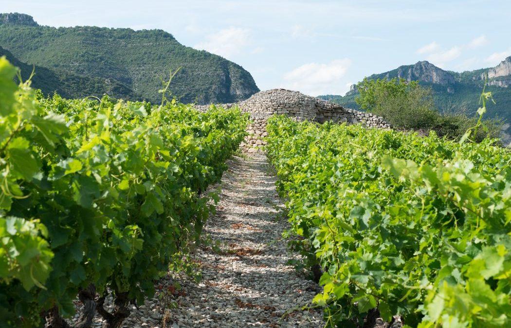 À venir : Chambre d'Agriculture de l'Hérault